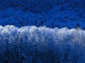 Winter.jpg: 800x600, 103k (04 November 2009, at 04:32 PM)